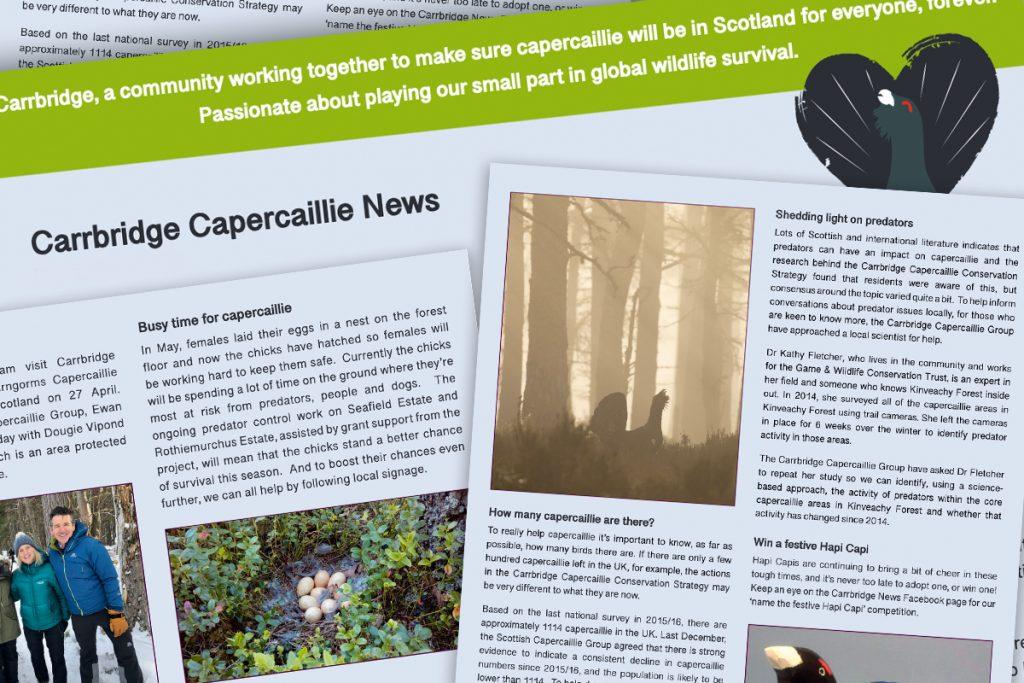 carrbridge capercaillie news