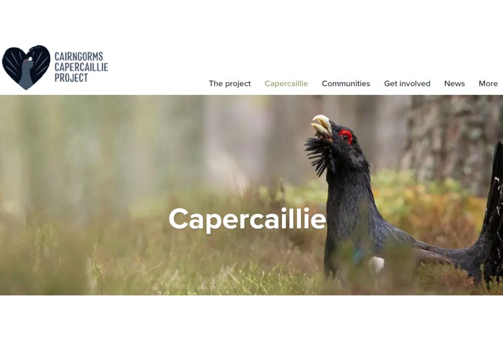 Capture_website
